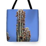 Cardon Cactus And Fruit  Tote Bag
