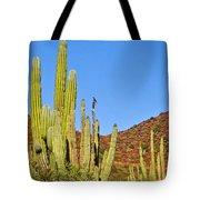 Cardon Cactus In Bahia Kino-sonora-mexico Tote Bag