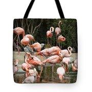 Caribbean Flamingos - Phoenicopterus Ruber Ruber Tote Bag