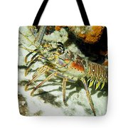 Caribbean Spiny Reef Lobster  Tote Bag