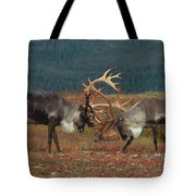 Caribou Males Sparring Tote Bag by Matthias Breiter