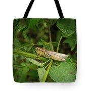 Carolina Locust Tote Bag