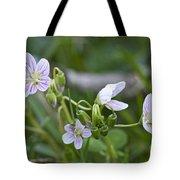 Carolina Spring Beauty - Wide-leaved Spring Beauty - Claytonia Caroliniana Tote Bag