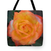 Caroty Splendor - Rose Tote Bag