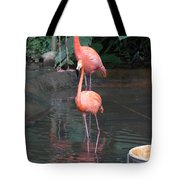 Cartoon - A Flamingo In The Small Lake In Their Exhibit In The Jurong Bird Park Tote Bag