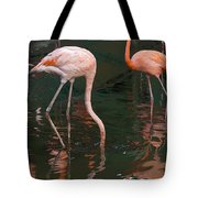 Cartoon - A Flamingo With Its Head Under Water In The Jurong Bird Park Tote Bag