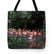 Cartoon - Flamingos In Their Exhibit Along With A Small Lake In The Jurong Bird Park Tote Bag