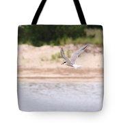 Caspian Tern Tote Bag