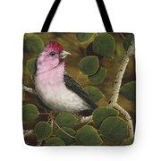 Cassins Finch Tote Bag