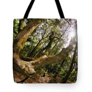 Castle Rock State Park Branch To The Sun Tote Bag