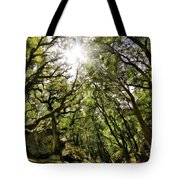 Castle Rock State Park Sun Rise Tote Bag