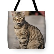 Cat In Aegina Island Tote Bag