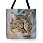 Cat In Athens Tote Bag