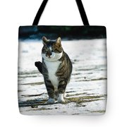 Cat In The Snow Tote Bag