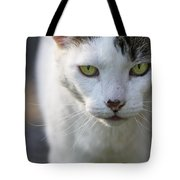 Cat Looking Tote Bag
