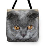 Cat Martin Tote Bag