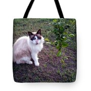 Cat 'n Orange Tree Tote Bag