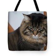 Cat Nap Time Tote Bag