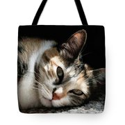 Cat Napping In The Sun By David Perry Tote Bag