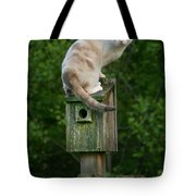 Cat Perched On A Bird House Tote Bag