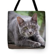Cat Stretch Tote Bag