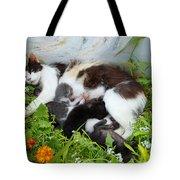 Cat Suckling Tote Bag