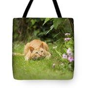Cat Watching Prey Tote Bag