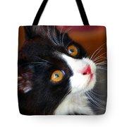 Innocent Kitten Tote Bag