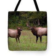 Cataloochee Elk Bull And Cow Tote Bag