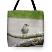 Catbird And Nest Material Tote Bag