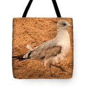 Catching A Tail Wind Tote Bag