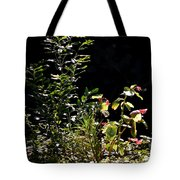 Catching The Last Rays Tote Bag