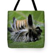 Caterpillar 22 Tote Bag