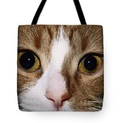 Cats Face Tote Bag