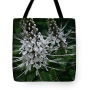 Cats Whiskers Kitty Whiskers Java Tea Orthosiphon Aristatus Nahiku Rainforest Maui Hawaii Tote Bag