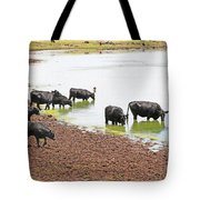 Cattle At Big Lake Arizona Tote Bag
