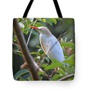 Cattle Egret 1 Tote Bag