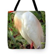 Cattle Egret Adult In Breeding Plumage Tote Bag