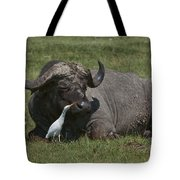 Cattle Egret With Cape Buffalo Tote Bag