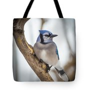 Cautious Blue Jay Tote Bag