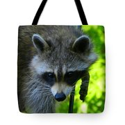 Cautious Coon Tote Bag