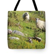 Cautious Sheep In The Pasture Tote Bag