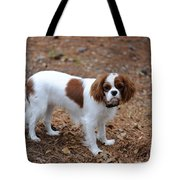 Cavalier Dog Tote Bag