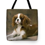 Cavalier King Charles Spaniel Dog Lying Tote Bag