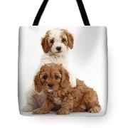 Cavapoo Puppies Tote Bag