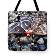 Cecropia Moth Blending In Tote Bag