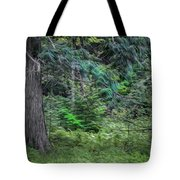 Cedar Along The Trail Of Cedars Glacier National Park Painted Tote Bag