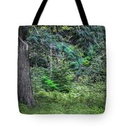 Cedar Along The Trail Of Cedars Glacier National Park  Tote Bag