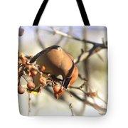 Cedar Waxwing - Img_0010-7x5 Tote Bag