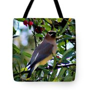 Cedar Waxwing In Tree 030515a Tote Bag